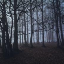 Nebel-Wald