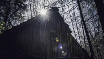 Die Hütte im Wald-37