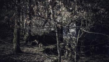 Die Hütte im Wald-38